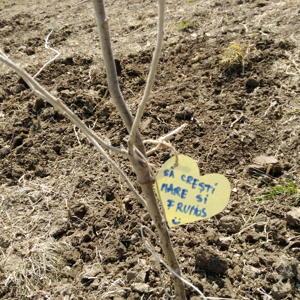 Marea plantare de copacei