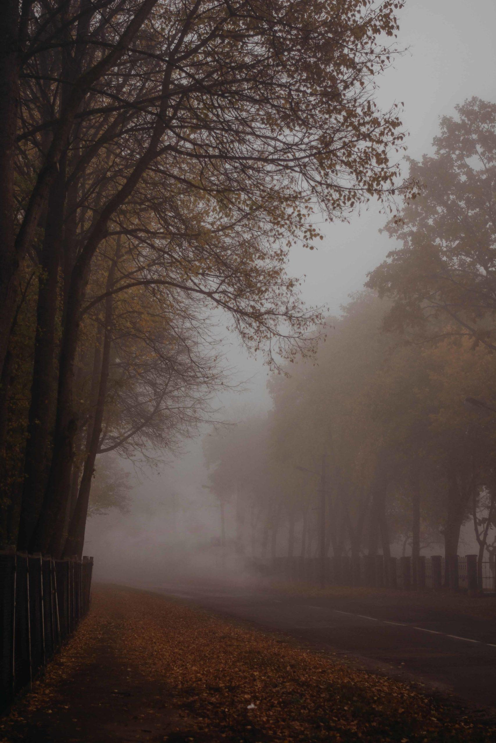 ceata peste copaci toamna